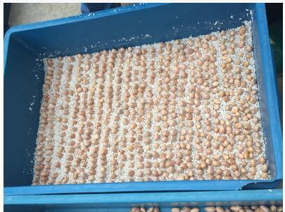 花生芽专用珍珠岩|营养土 无土栽培|珍珠岩粉|
