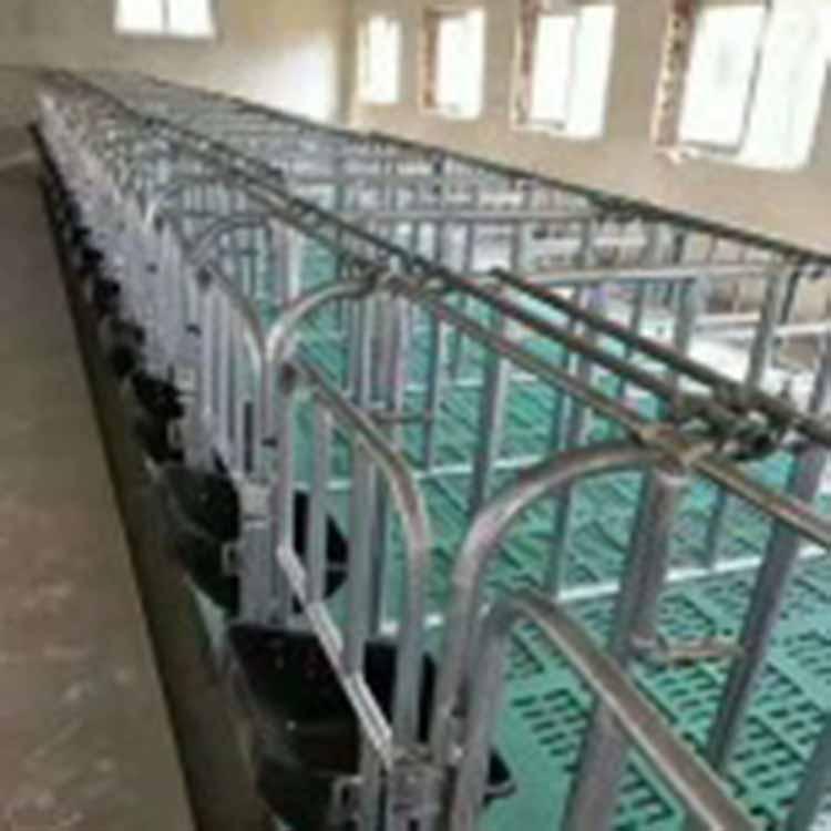 不锈钢保育床_金泉机械_牲畜生育围栏_厂家直供