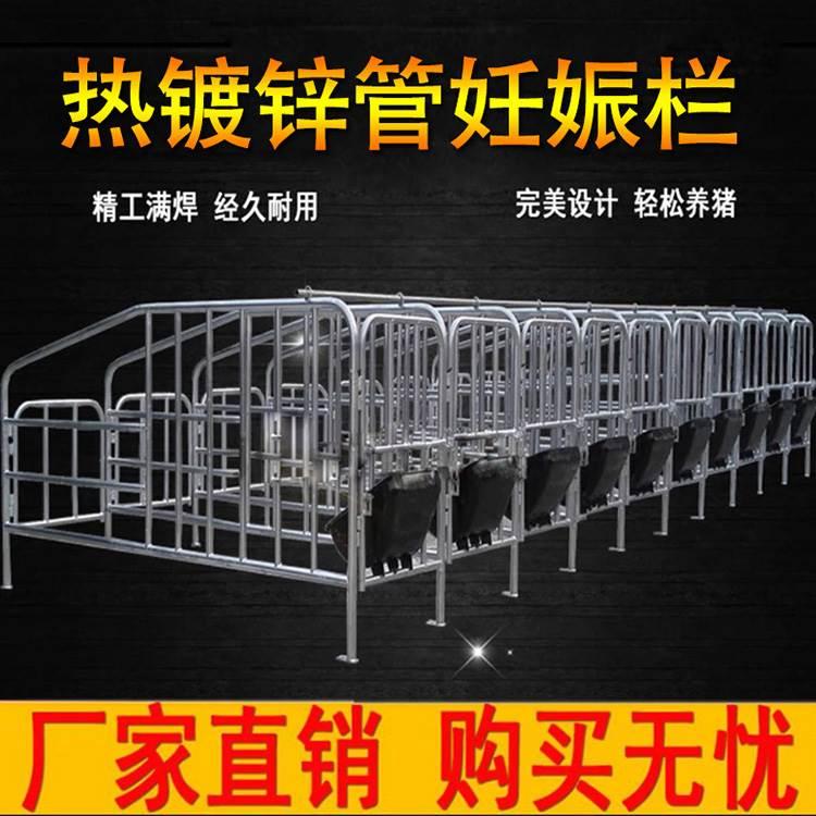 母猪保育床_金泉机械_牲畜生育围栏_厂家直供
