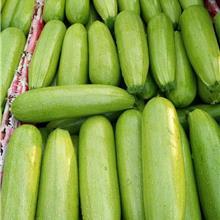 西葫芦种子 耐寒西葫芦品种 大棚西葫芦种子厂家 早春西葫芦种子