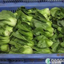 生鲜供应链_寮步农副产品配送_首宏蔬菜配送公司